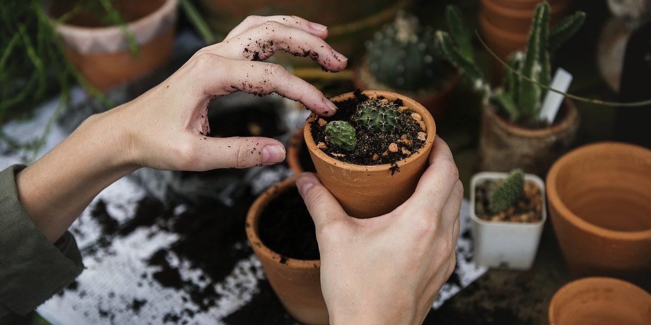 Cet hiver je prends soin de mes plantes